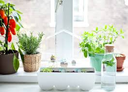 100 kitchen plants this smart herb garden lets you click