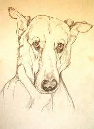 bichon frise z hter hessen 8 best dog art images on pinterest dog portraits animals and dog