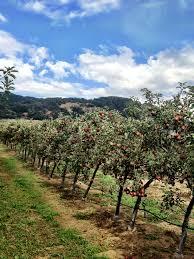apple picking my blog