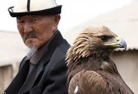 strange eagle wallpapers incredible images of the young golden eagle hunters training their
