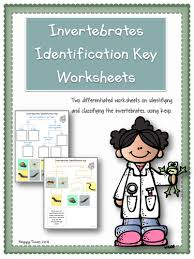 classification lesson plan and worksheets by saveteacherssundays