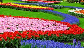 flower garden design photo tavernierspa tavernierspa