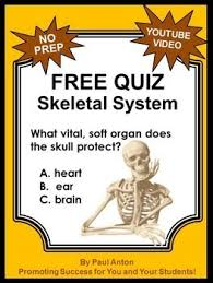 the 25 best skeletal system worksheet ideas on pinterest