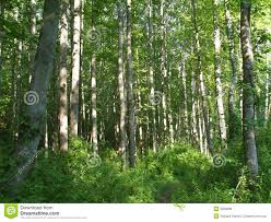Maryland forest images Maryland forest and trees royalty free stock photos image 5509698 jpg