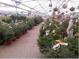real christmas trees for sale real christmas trees find your fir at perrywood perrywood