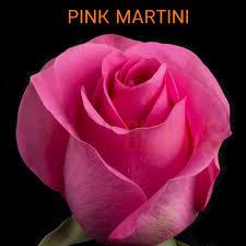 pink martini native blooms wholesale premium ecuadorian roses exclusive