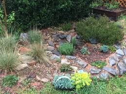 need rock garden plant and layout guidance gardening