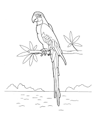 coloring page macaws