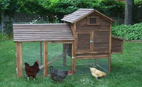 awesome backyard chicken coop architecture nice