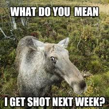 Moose Meme - livememe com terrifying nature facts moose