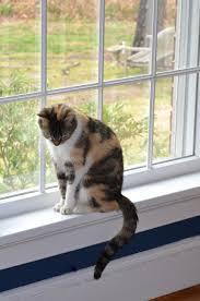Window Sill Cat Bed Sundae Sundae These Days Of Mine