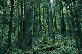 Washington forest images Rainforest of washington washington state photography collection jpg