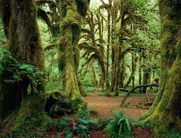 Oregon forest images High latitude rain forest oregon pixdaus jpg