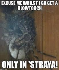 Straya Memes - image tagged in australia imgflip