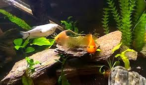 how to stock a freshwater fish tank how many u0026 which types of fish