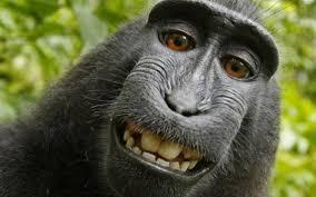 caso cerrado wikipedia caso cerrado una foto tomada por un mono no tiene dueño redes