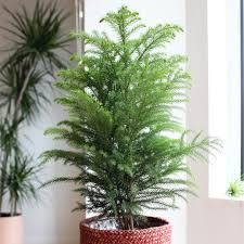 houseplants welltended shop for house plants online with free delivery
