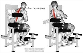 Back Extension Sit Up Bench Machine Back Extension Exercise Guide And Weight Training