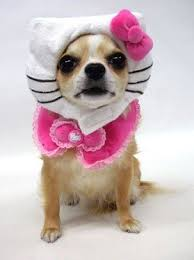 Small Puppy Halloween Costumes 93 Dog Costumes Images Animals Costume Ideas