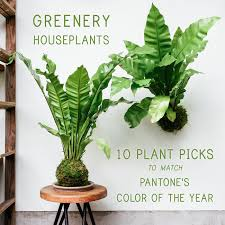 10 Best Houseplants To De by The Greenery Houseplant 10 Perfect Picks For Pantone U0027s Color Of