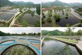 how to start my own fish farm how profitable is this business