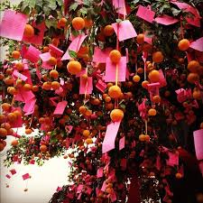 64 best wish tree images on wishing trees new