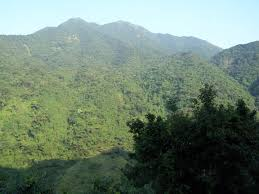 tree mountain dreamtimenow