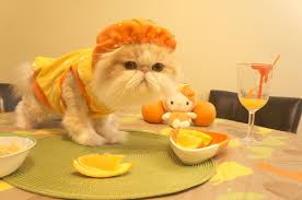 Halloween Kitty by Halloween Vitamin C Kitty Youtube