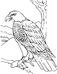 bald eagle coloring kids free printable picture