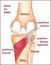 Back Knee Anatomy Health Tips From The Professor Pain Behind The Knee Relief