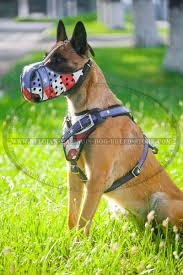 belgian shepherd us army get belgian malinois leather harness