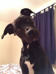 Confused Dog Meme - today is my cake day and i woke up to a confused dog this morning