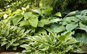 gardening the best plants for clay soil grow in full sun and