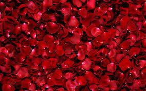 Dark Red Flower - flower wallpaper free red flower petals