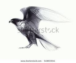 falcon stock images royalty free images u0026 vectors shutterstock
