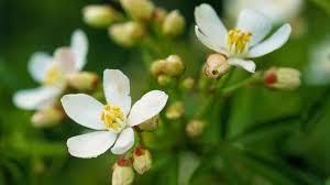 Fragrant Plants For Shade - best fragrant flowers sunset