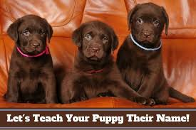 Why Do Dogs Lick The Sofa Why Do Dogs Lick Your Face Hands And Feet Should You Stop It