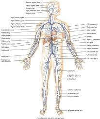 anatomy latin roots gallery learn human anatomy image