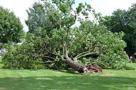 Freibad Bad Hersfeld Baum Auf Liegewiese Im Freibad Rosenau Umgestürzt Niemand