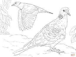 turtle dove clipart printable pencil and in color turtle dove