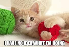 Dat Ass Cat Meme - dat ass tomato memes and comics
