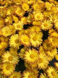 today u0027s sermon is by the flowers in natan u0027s garden hoshana