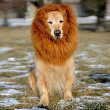 lion halloween costume online get cheap lion dog costumes aliexpress com alibaba group