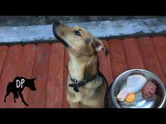 german shepard mix eating raw fish fillet raw fed dog raw food