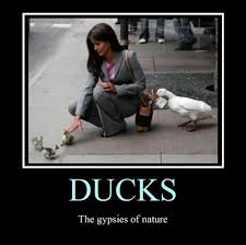 Sneaky Meme - those sneaky ducks very demotivational demotivational posters