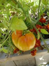 2043 best vegetable garden bloggers u0026 writers united images on