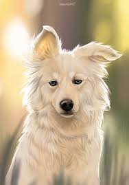 american eskimo dog meme border collie digital painting by mekreant on deviantart