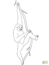 sitting gibbon coloring page free printable coloring pages