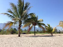 honduras real estate beach lot sales