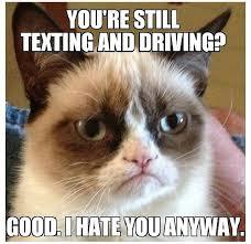 Grumpy Cat Coma Meme - 41 best grumpy cat images on pinterest grumpy kitty grumpy cat